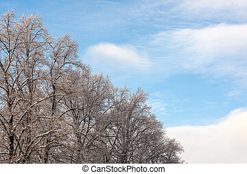 gelado, árvores inverno, dia