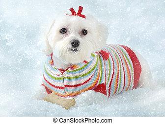 gelado, filhote cachorro, neve, mentindo, cão