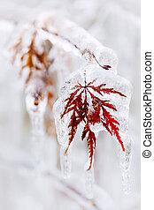 gelado, folha, inverno