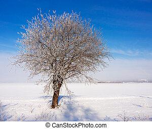 gelado, inverno árvore, dia