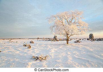 gelado, inverno árvore, manhã