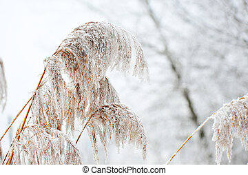 gelado, inverno