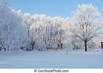 gelado, inverno, dia