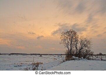 gelado, inverno, fields.