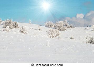 gelado, inverno, floresta