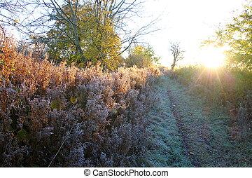 gelado, manhã, em, novembro