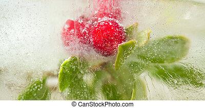 gelado, plantas