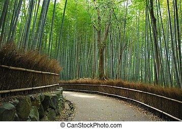 gelassen, dicht, hain, pfad, entlang, bambus