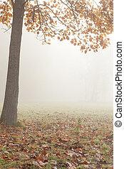 gelassen, herbstlandschaft, -, a, baum, und, nebel