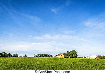 gelber , bauernhaus, auf, a, ländlich, grünes feld