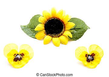 gelber , sonnenblume