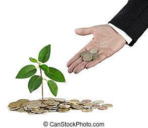 geld, sapling