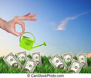geld, watering, boompje, menselijke hand