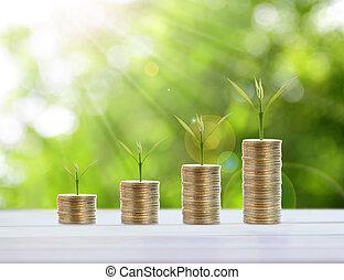 geldmünzen, begriff, sparenden geld