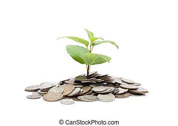 geldmünzen, schuss, wachsen, haufen