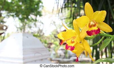 gele achtergrond, orchidee