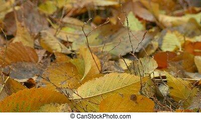 gele, autumn leaves, leugen, op, grond, achtergrond