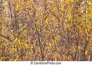 gele bladeren, op, de struik, in, herfst bos