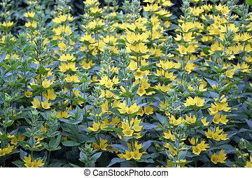 gele, blauwe bloemen