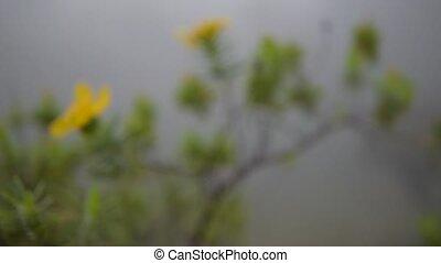 gele bloem, selectieve nadruk