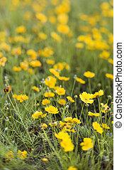 gele bloemen, groeiende, wild.