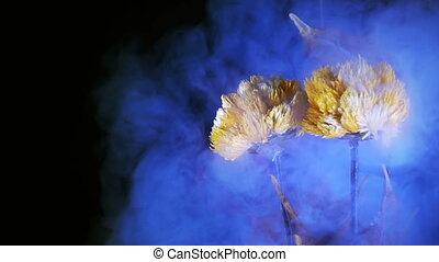 gele bloemen, in, rook