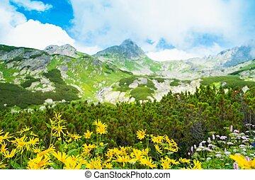 gele bloemen, tegen, mooi, berg overzicht