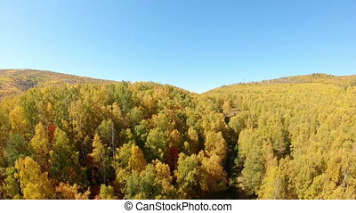 gele, bos, herfst, vliegen over, bomen.