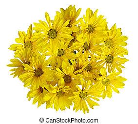 gele, chrysant, bloem