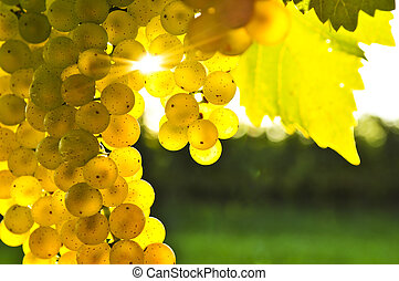 gele, druiven