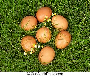 gele, eitjes, leugen, op, groen gras
