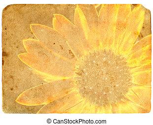 gele, flower., oud, postcard.