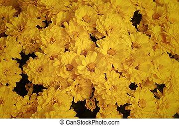 Zon bloemen tuin gele glanste meadow zomer tuin for Gerbera in de tuin