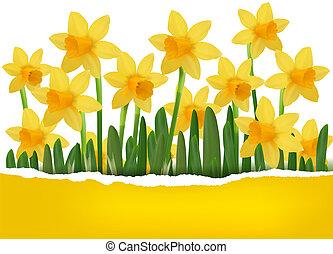 gele, voorjaarsbloem, achtergrond