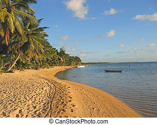 gele, zand strand, met, palmbomen, nieuwsgierig, boraha,...