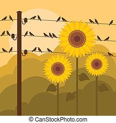 gele, zonnebloemen, landscape, achtergrond