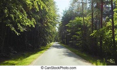 geleider, op, een, bos, straat