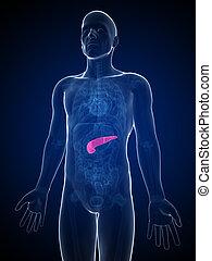 geleistet, mann, 3d, abbildung, bauchspeicheldrüse