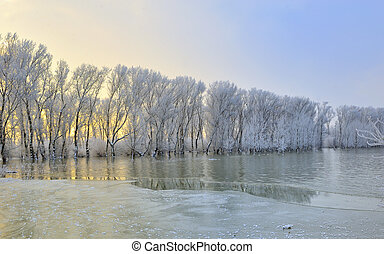 gelido, albero, inverno