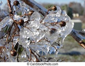 gelo, árvore