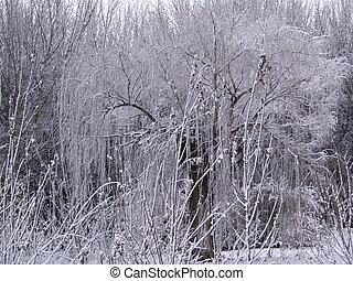 gelo, árvores.
