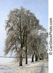 gelo, árvores