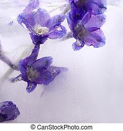 gelo, congelado, fundo, aconite, flor