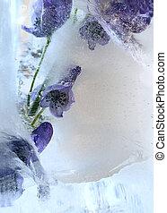 gelo, fundo, ar, bubbles., branchaconite, flor, cubo