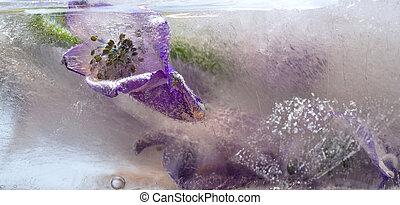 gelo, fundo, ar, configuração, cubo, primavera, bubbles.,...