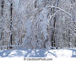 gelo, ligado, a, árvores