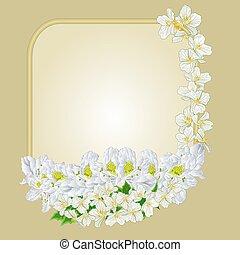 gelsomino, cornice, vettore, rododendro