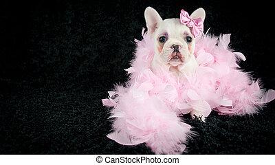 gemacht, -, auf, französische bulldogge, junger hund