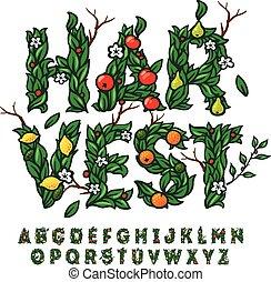 gemacht, fest, alphabet, blätter, früchte, ernte