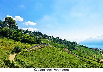 genève, lac, terrasses, vignoble, suisse, ligne ferroviaire, lavaux